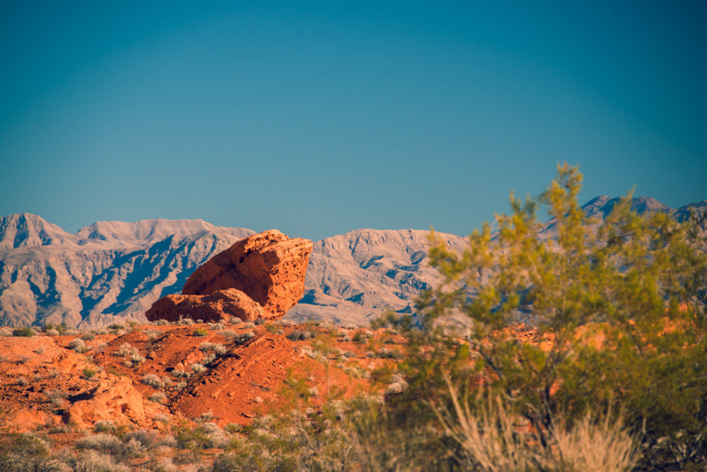 a red rock and a green bush balance each other at valley of fire state park in nevada, photographed by jamie bannon photography.