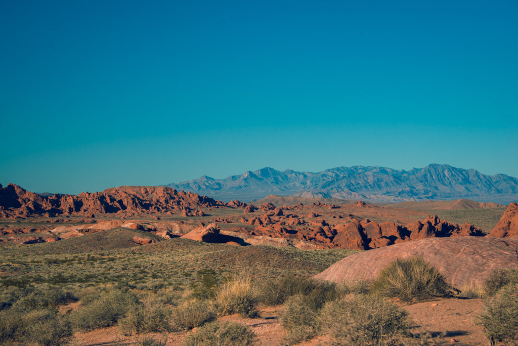 landscape with red rocks and green brush at valley of fire state park in nevada, photographed by jamie bannon photography.